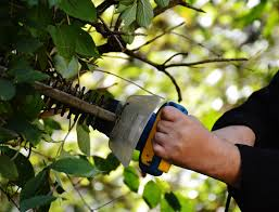 Tree Care Tips Port Orange