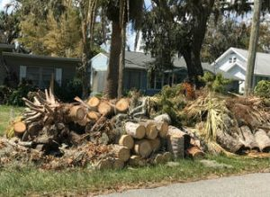 Recycle Wood Ormond Beach
