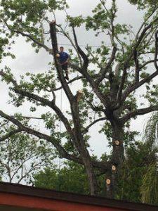 Hazard Trees Port Orange