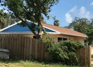 Tree Removal New Smyrna Beach