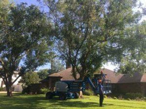 Tree Service Cost Daytona Beach
