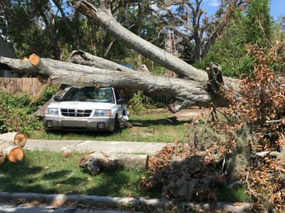 emergency-tree-service-daytona-beach