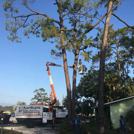 Daytona Beach Tree Removal