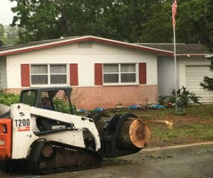 Cost of Tree Removal New Smyrna Beach