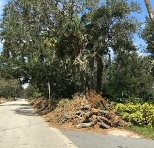 Tree Stump Removal Port Orange