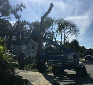 Dead Tree Removal Port Orange