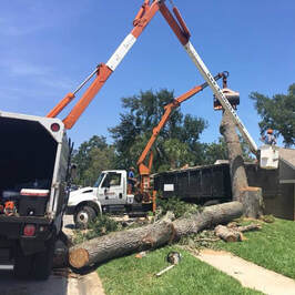 Ormond Beach Tree Cutting