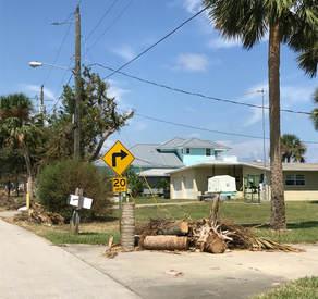 Daytona Beach Tree Maintenance