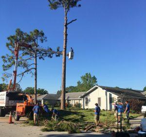 Tree Trimming Port Orange