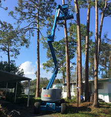 Professional Tree Removal Port Orange