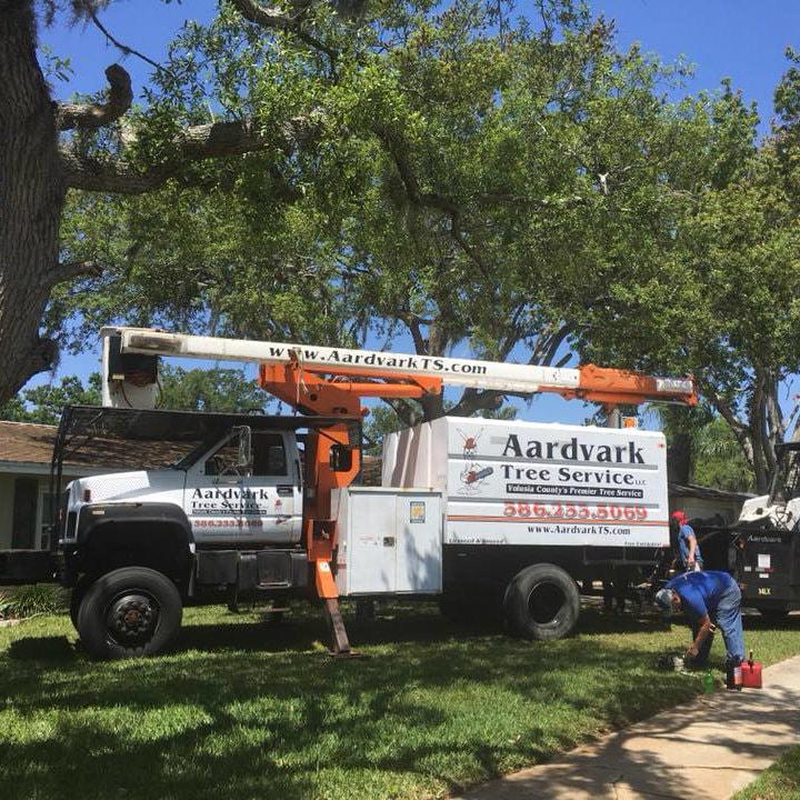 tree-service-port-orange-fl_orig