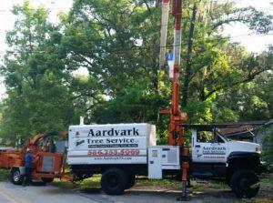 Top Tree Contractor Port Orange