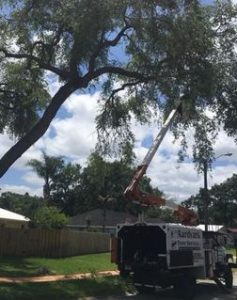 Ormond Beach Tree Pruning