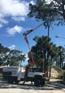 Tree Trimming New Smyrna Beach