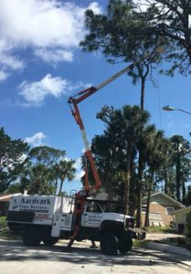 Tree Maintenance Services Ormond Beach