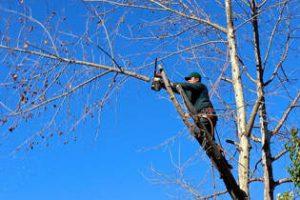 Daytona Beach Tree Branch Removal