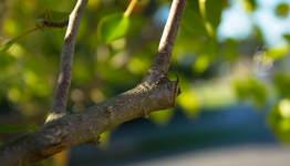 Port Orange Tree Pruning