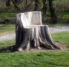 Tree Stump Removal Daytona Beach