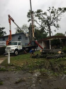 Tree Maintenance Daytona Beach