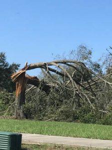 Dead Tree Removal Daytona Beach