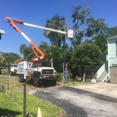 Tree Removal Port Orange
