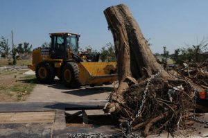 Tree Removal Quote Ormond Beach