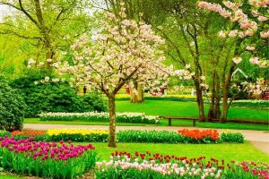 most beautiful trees for your yard