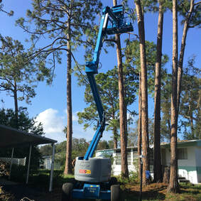 Tree Service New Smyrna Beach