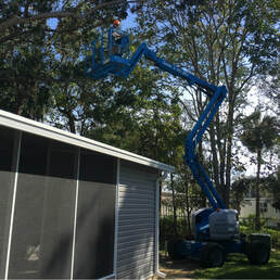 Tree Service Port Orange