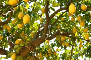 Fruit Tree Care Port Orange