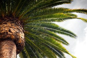 Palm Tree Maintenance Ormond Beach