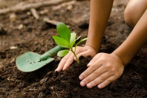 how to choose a tree to plant daytona beach