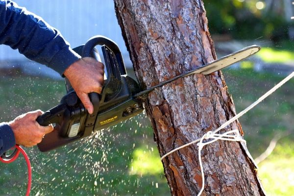 Affordable Tree Removal Ormond Beach