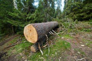 DIY Tree Removal Ormond Beach