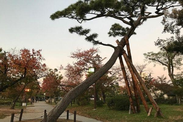 deland pine tree removal