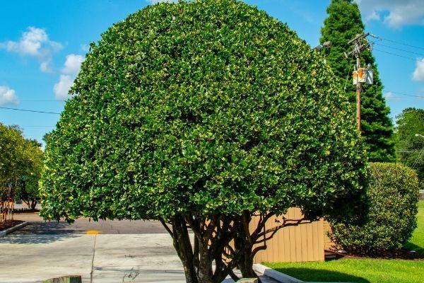 tree care tips daytona beach