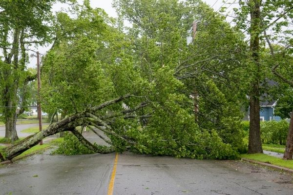 who is responsible for fallen tree removal