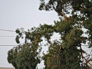 tree removal near power lines ormond beach