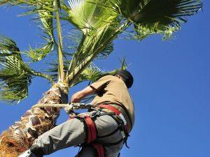 Palm Tree Trimming Tips Port Orange