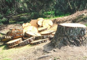 how much is it to cut down a tree Port Orange