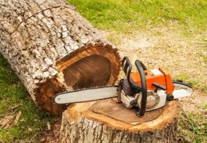 Tree Removal Tools and Equipment Deland