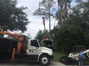 Professional Tree Service Deland