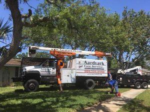 best tree removal service near me new smyrna beach