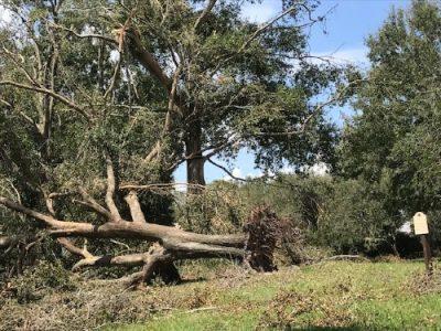 emergency tree service port orange fl