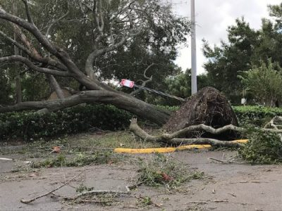 emergency tree service port orange florida