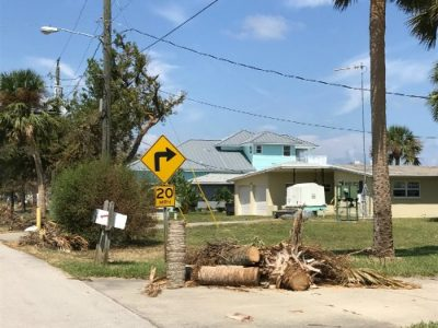 emergency tree service port orange