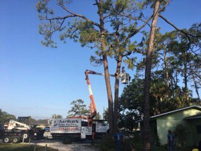 tree removal new smyrna beach fl