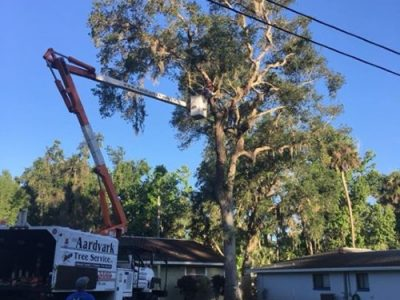 tree removal new smyrna beach florida