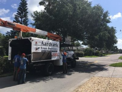 tree service daytona beach