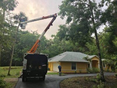 tree service daytona beach fl